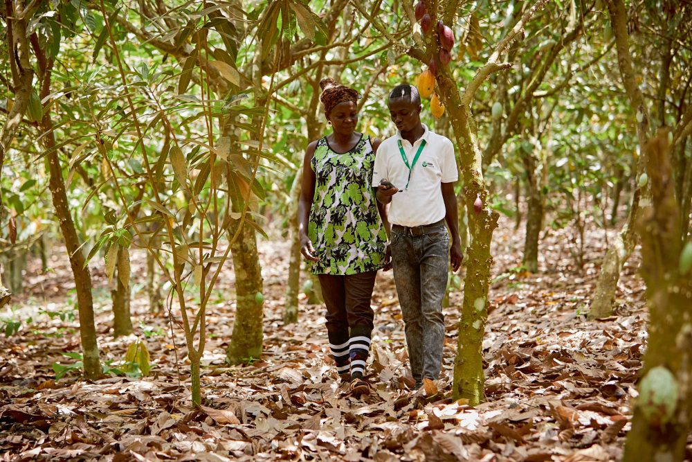 Olam's cocoa sustainability drive makes headway in Ghana