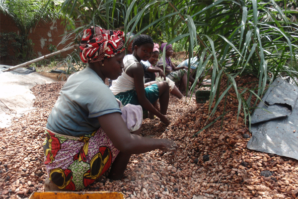 Frustration grows as governments try to find a way for fairer cocoa payments