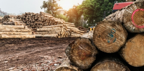 Deforestation policies offer steps in the right direction
